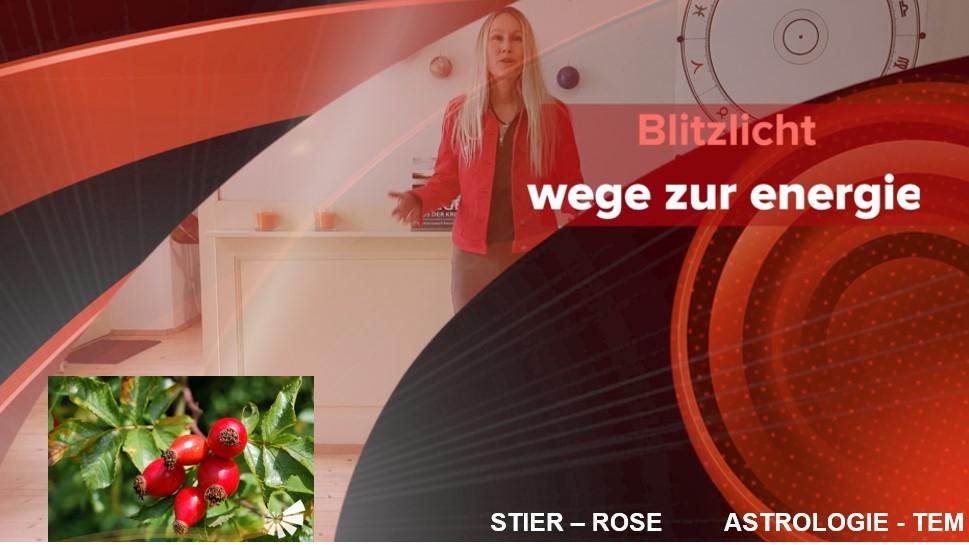 Martina Isabell Racek, MSc - Rose
